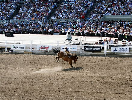 A competition for bareback bronc riding during the 2011 Calgary Stampede. Calgary Stampede Rodeo final day 18 - 2011.jpg