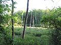 Calvert Cliffs State Park - Lusby, Maryland (14610638340).jpg