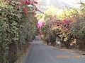 Camino de acceso a Ixcatan - panoramio.jpg