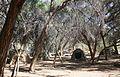 Campement près d'Homeb (Namibie) (3).jpg