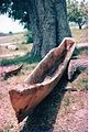 Canoe dug from a tree (3078591325).jpg
