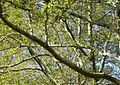 Canopy-1440x1024.jpg