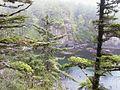 Cape Flattery - panoramio.jpg