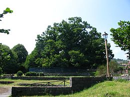 Castagno Dei Cento Cavalli Wikipedia