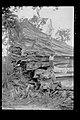 Castanheira Derrubada na Abertura do Traçado da Ferrovia Madeira-Mamoré - 1223, Acervo do Museu Paulista da USP.jpg