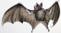 Castelnau-Cheiroptères-3-Phyllostomidés.png