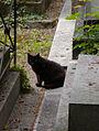 Cat 3 Cimetière de Montmartre.jpg