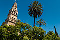 Cathedral–Mosque of Córdoba (6933163082).jpg
