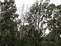 Chadwick - Bushland on Shelden.jpg