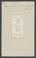 Chasolium - Print - Iconographia Zoologica - Special Collections University of Amsterdam - UBAINV0274 015 08 0005.tif