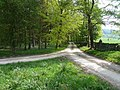 Chatsworth Grounds - Private Track near Swiss Lake - geograph.org.uk - 798401.jpg