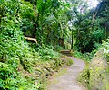 Cherrapunjee Rain Forests (7158996145).jpg