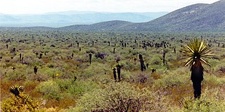 Meseta Central matorral Ecoregion in Mexico