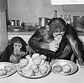 Chimpansees Hilda en Tilly uit Artis, Bestanddeelnr 917-2810.jpg