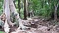 Chinnar River - panoramio (3).jpg