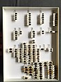 Chrysomelidae collection, Natural History Museum, London 209.jpg