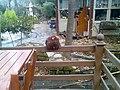 Cinar Restaurant Aralik 2009 - panoramio.jpg