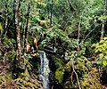 Cloud forest vegetation in El Cielo Biosphere Reserve, 24 September 2003.jpg