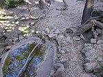 Coatis no Badoca Park.JPG