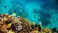 Colorful underwater world, Mabini Batangas - panoramio (11).jpg