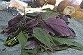 Commercialisation plantes et médécine traditionnelle au Cameroun15.jpg