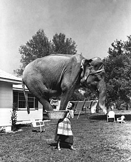 Composite photograph of Jean Younkers holding an elephant in a laundry basket (9352357240)