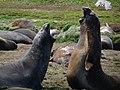 Conversation bruyante - panoramio.jpg