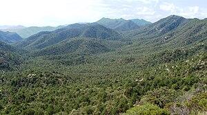 Coronado National Forest - Image: Coronado Natl Forest Nima 1