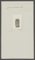 Coronula tubicinella - - Print - Iconographia Zoologica - Special Collections University of Amsterdam - UBAINV0274 101 02 0039.tif