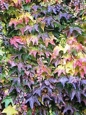 Couleurs d'automne03.jpg