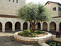 Courtyard of the Church of the Multiplication in Tabgha by David Shankbone.jpg
