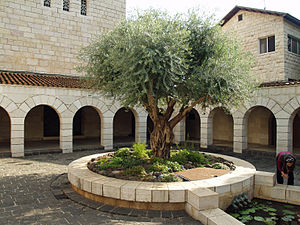 Tabgha - Church courtyard with olive tree.