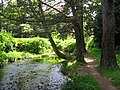 Covenanter's Wood - geograph.org.uk - 9784.jpg