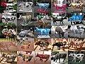 Cow parade mosaico 01-25 - panoramio.jpg