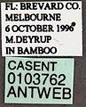 Crematogaster ashmeadi casent0103762 label 1.jpg