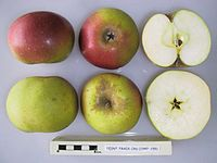 Cross section of Teint Frais, National Fruit Collection (acc. 1947-155).jpg