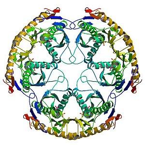 RNase PH - Image: Crystal structure 1UDN