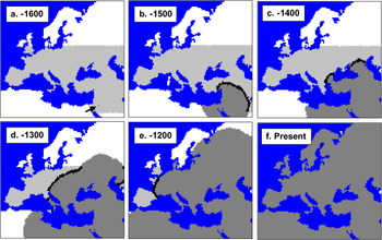 Homo Neanderthalensis Wikipedia