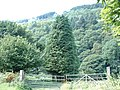 Cwm Dyffryn - geograph.org.uk - 53471.jpg