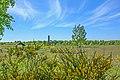 Döberitzer Heide mit Obelisk.jpg