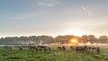 Dülmen, Merfeld, Dülmener Wildpferde in der Wildbahn -- 2016 -- 4241.jpg