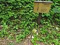 Dactylorhiza fuchsii 30.jpg