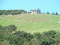 Daegwallyeong sheep farm1.jpg