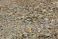 Dana Plateau Plot 122 (11878496905).jpg