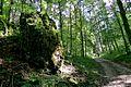 Das Eselsburger Tal bei Herbrechtingen im Kreis Heidenheim. 19.jpg