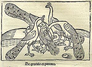 """Holzschnitt mit Untertitel """"De Graculo et Pavone""""."""