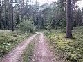 Degučių sen., Lithuania - panoramio (223).jpg