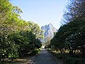 Devil's Peak seen up Japonica Walk.jpg