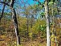 Devils Lake during Autumn - panoramio.jpg
