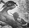 Die Gartenlaube (1891) b 478.jpg